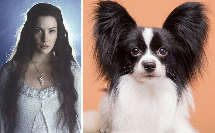 E se os personagens do filme Senhor dos anéis fosse todos cães? 16