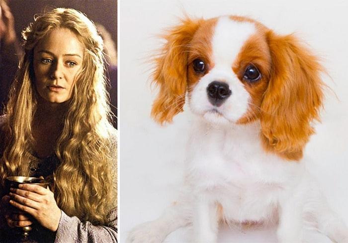 E se os personagens do filme Senhor dos anéis fosse todos cães? 17