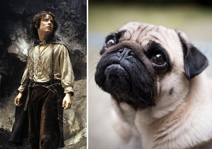 E se os personagens do filme Senhor dos anéis fosse todos cães? 19