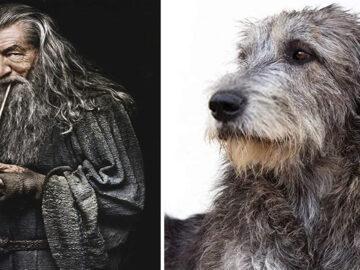 E se os personagens do filme Senhor dos anéis fosse todos cães? 5