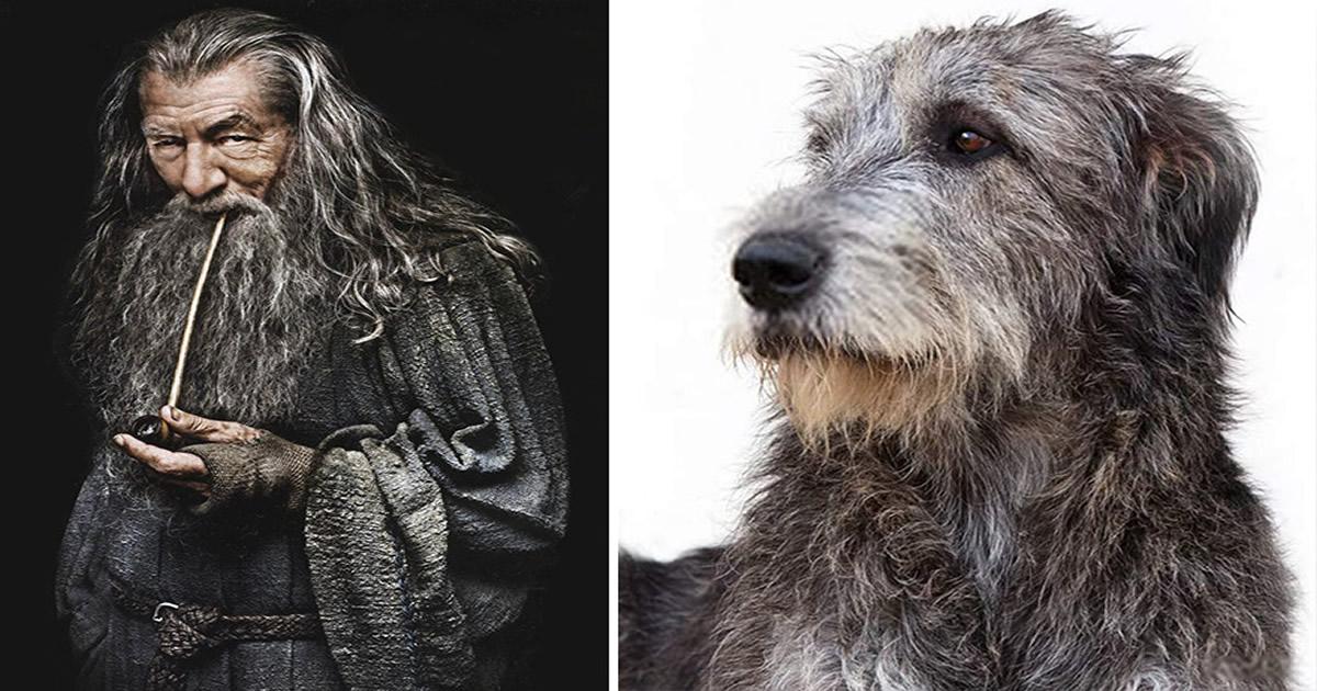 E se os personagens do filme Senhor dos anéis fosse todos cães? 33