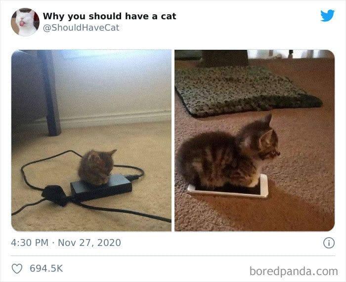 40 formas de como convencer seus pais a adotar um gato 16