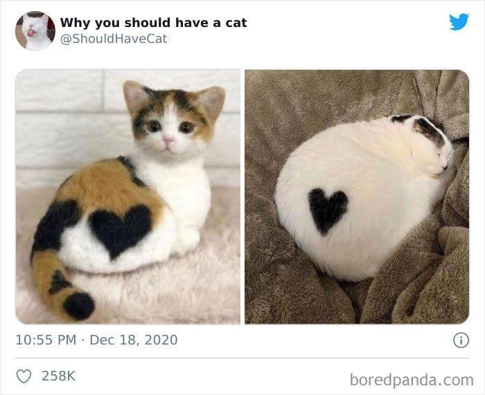 40 formas de como convencer seus pais a adotar um gato 21