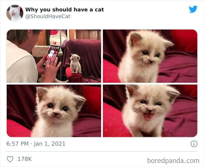 40 formas de como convencer seus pais a adotar um gato 24