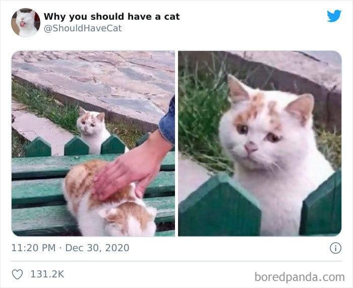 40 formas de como convencer seus pais a adotar um gato 31