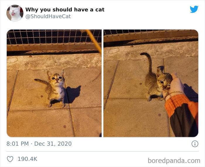 40 formas de como convencer seus pais a adotar um gato 33