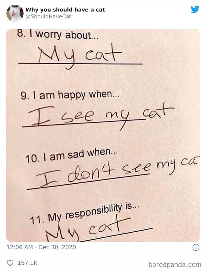 40 formas de como convencer seus pais a adotar um gato 34