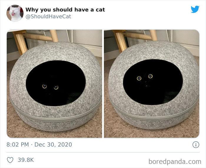 40 formas de como convencer seus pais a adotar um gato 38