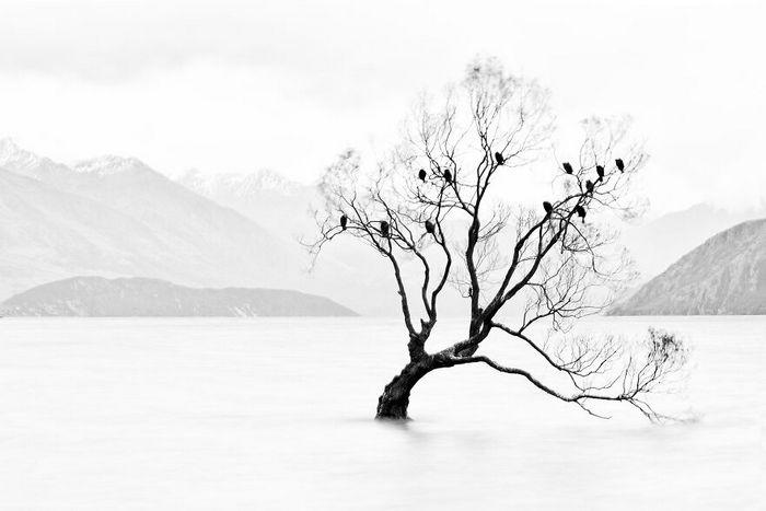 40 fotos da natureza de tirar o fôlego que ganharam o 2020 International Photography Awards 20