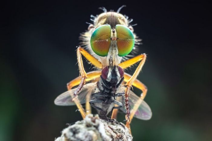 40 fotos da natureza de tirar o fôlego que ganharam o 2020 International Photography Awards 28