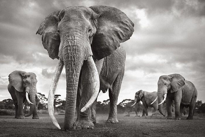 40 fotos da natureza de tirar o fôlego que ganharam o 2020 International Photography Awards 29
