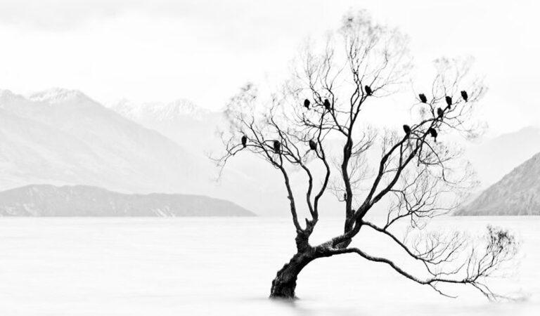 40 fotos da natureza de tirar o fôlego que ganharam o 2020 International Photography Awards 23