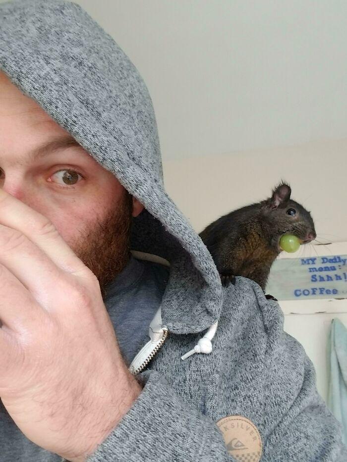 As pessoas postam fotos de gatos nos ombros e agora os proprietários de outros animais de estimação aderiram à tendência 7
