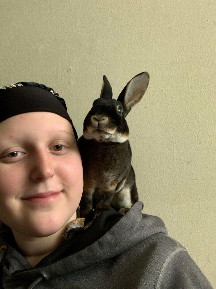 As pessoas postam fotos de gatos nos ombros e agora os proprietários de outros animais de estimação aderiram à tendência 9