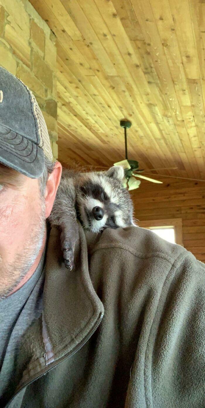As pessoas postam fotos de gatos nos ombros e agora os proprietários de outros animais de estimação aderiram à tendência 11