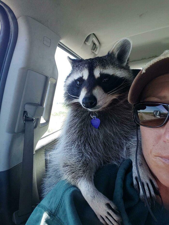 As pessoas postam fotos de gatos nos ombros e agora os proprietários de outros animais de estimação aderiram à tendência 14