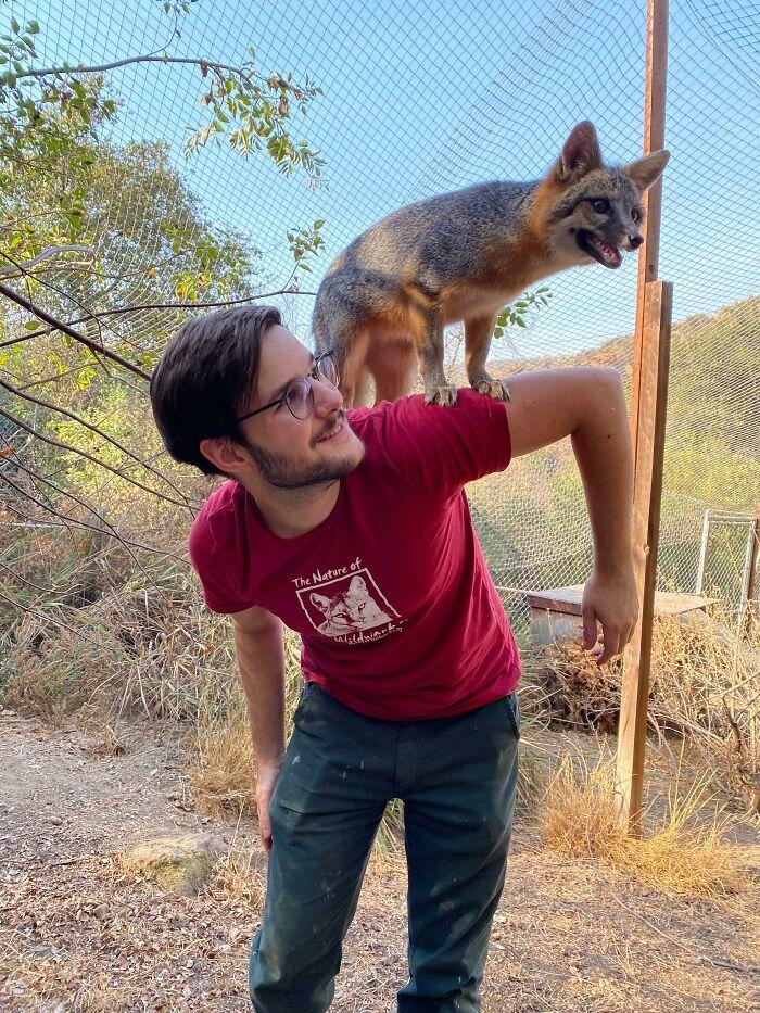 As pessoas postam fotos de gatos nos ombros e agora os proprietários de outros animais de estimação aderiram à tendência 23