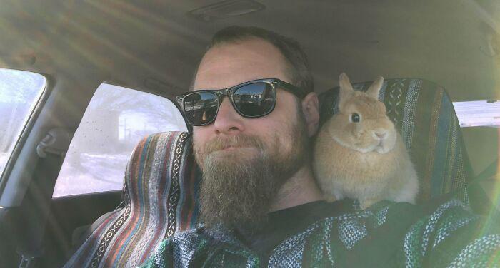 As pessoas postam fotos de gatos nos ombros e agora os proprietários de outros animais de estimação aderiram à tendência 24