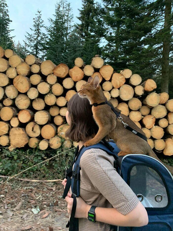 As pessoas postam fotos de gatos nos ombros e agora os proprietários de outros animais de estimação aderiram à tendência 29