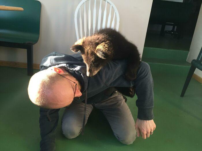 As pessoas postam fotos de gatos nos ombros e agora os proprietários de outros animais de estimação aderiram à tendência 34