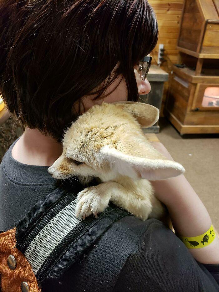 As pessoas postam fotos de gatos nos ombros e agora os proprietários de outros animais de estimação aderiram à tendência 35