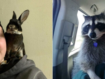 As pessoas postam fotos de gatos nos ombros e agora os proprietários de outros animais de estimação aderiram à tendência 6