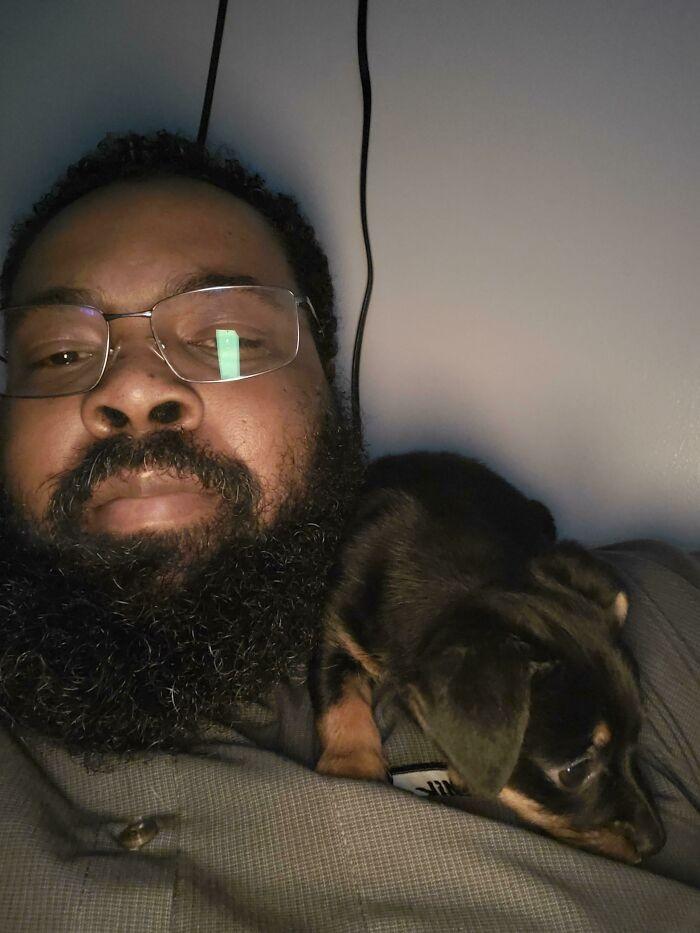 As pessoas postam fotos de gatos nos ombros e agora os proprietários de outros animais de estimação aderiram à tendência 38