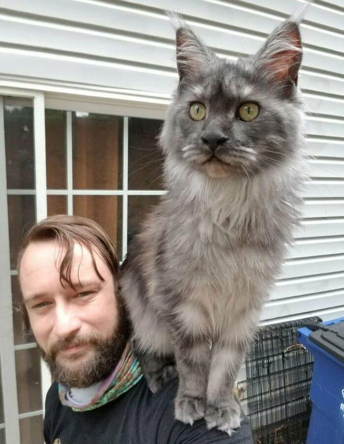 As pessoas postam fotos de gatos nos ombros e agora os proprietários de outros animais de estimação aderiram à tendência 41