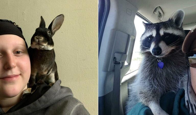 As pessoas postam fotos de gatos nos ombros e agora os proprietários de outros animais de estimação aderiram à tendência 87