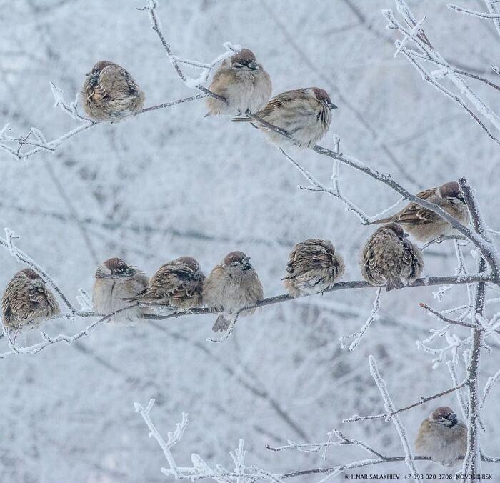 30 fotos que mostram o quão insuportável está o frio na Rússia agora 13