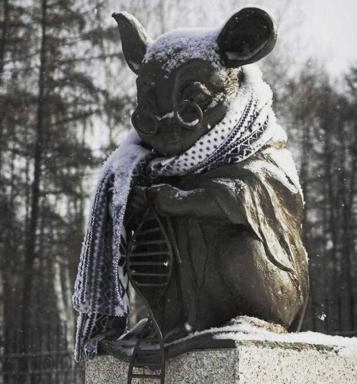 30 fotos que mostram o quão insuportável está o frio na Rússia agora 31