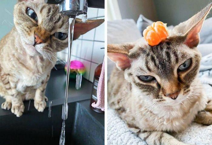 15 gatinhos que são mestres na arte de fazer caretas bizarras 10