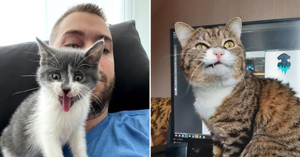 15 gatinhos que são mestres na arte de fazer caretas bizarras 2
