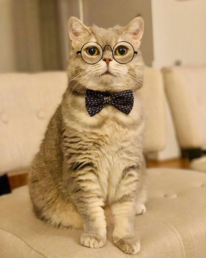 O gatinho abandonado que virou influencer de moda após ganhar um lar 2