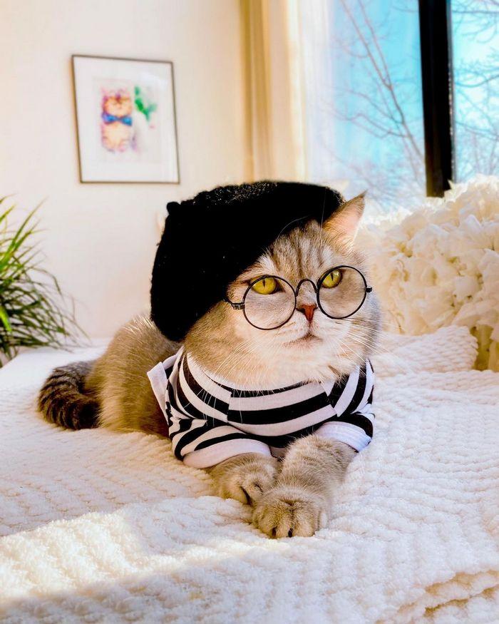 O gatinho abandonado que virou influencer de moda após ganhar um lar 3