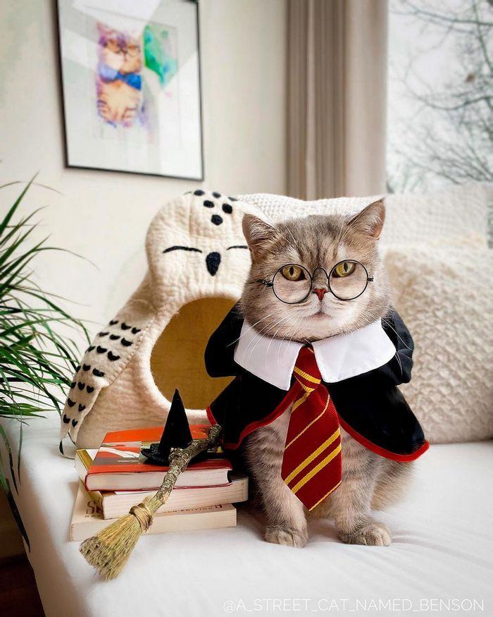 O gatinho abandonado que virou influencer de moda após ganhar um lar 6
