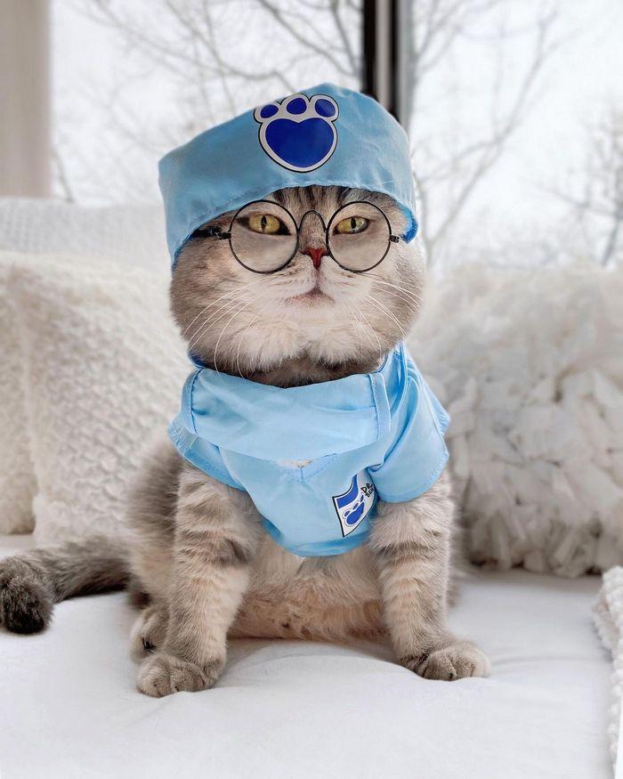 O gatinho abandonado que virou influencer de moda após ganhar um lar 10