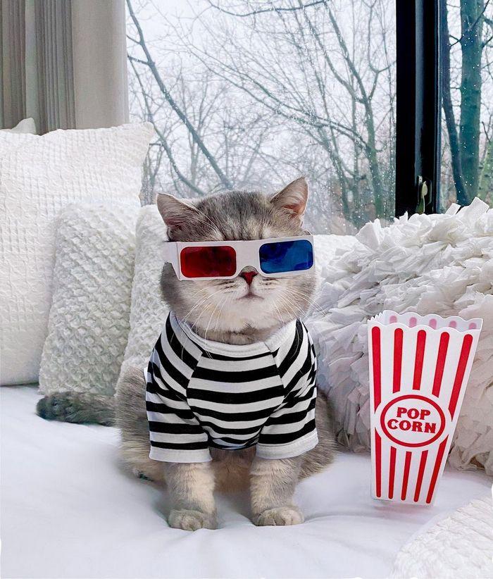 O gatinho abandonado que virou influencer de moda após ganhar um lar 11