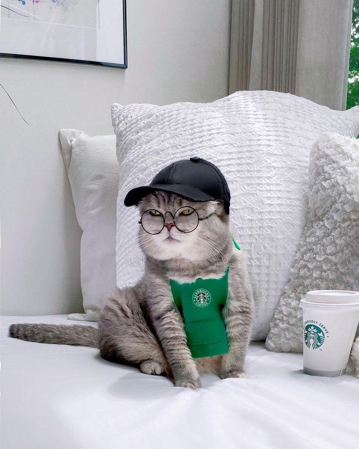 O gatinho abandonado que virou influencer de moda após ganhar um lar 14