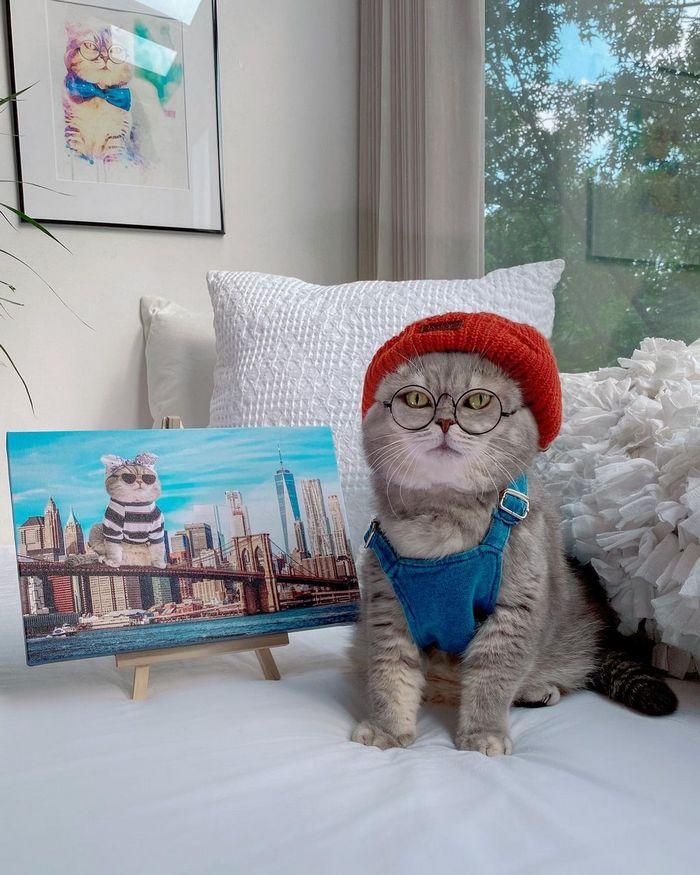 O gatinho abandonado que virou influencer de moda após ganhar um lar 16
