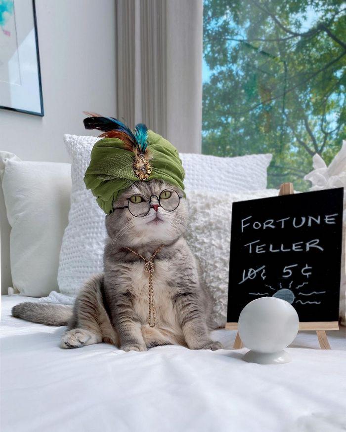 O gatinho abandonado que virou influencer de moda após ganhar um lar 18