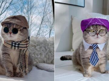 O gatinho abandonado que virou influencer de moda após ganhar um lar 5