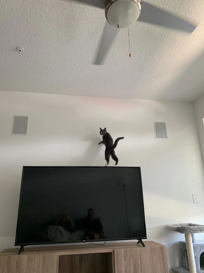 O que há de errado com seu gato? 5