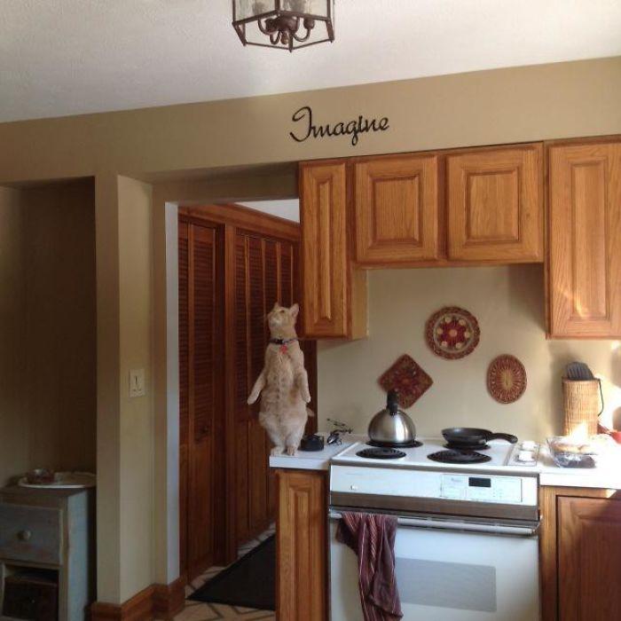 O que há de errado com seu gato? 6