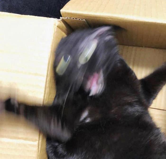 O que há de errado com seu gato? 7