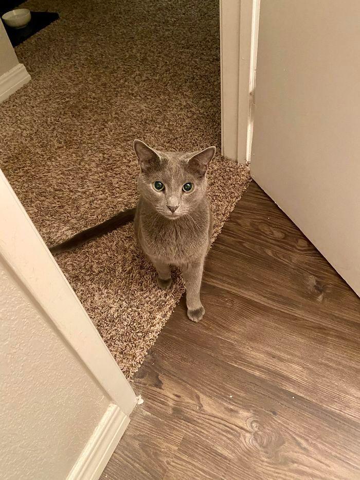 O que há de errado com seu gato? 12