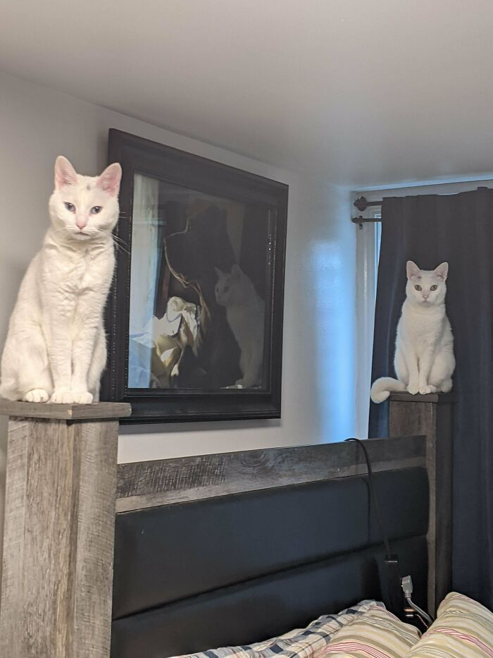 O que há de errado com seu gato? 17