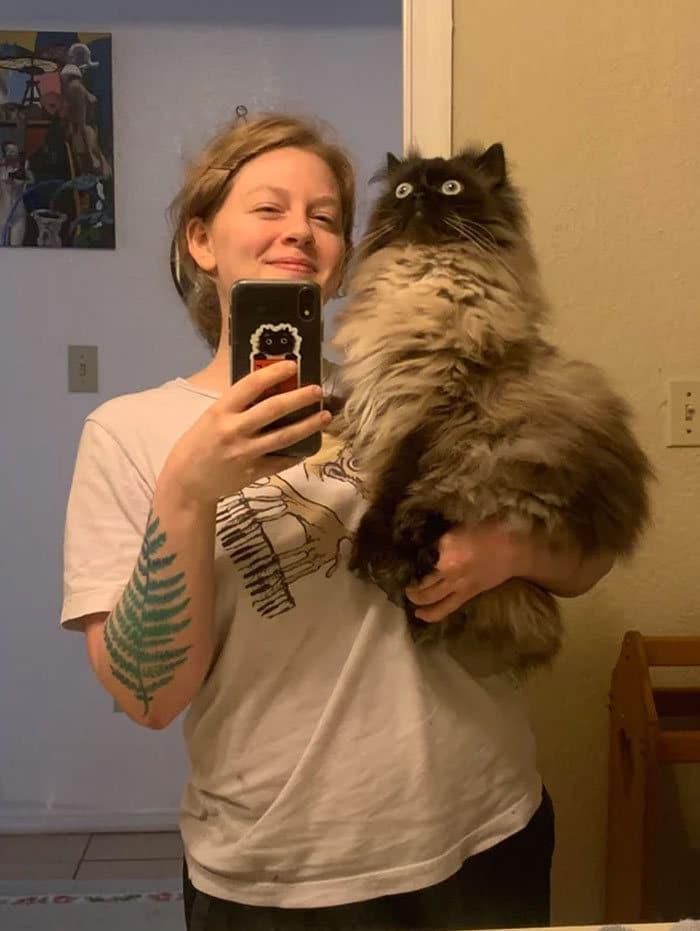 O que há de errado com seu gato? 26