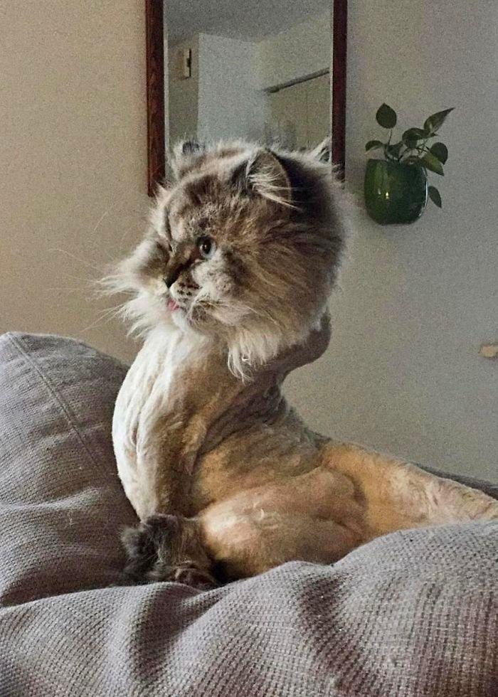 O que há de errado com seu gato? 31