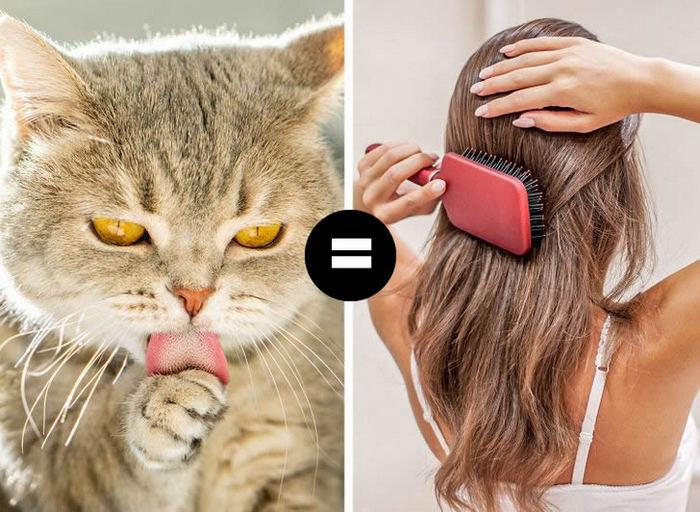 Por que a língua do gato é áspera? 4